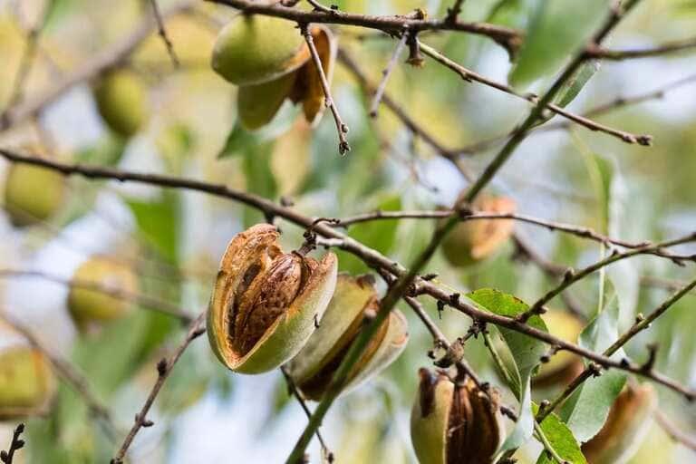 5. Древесные орехи