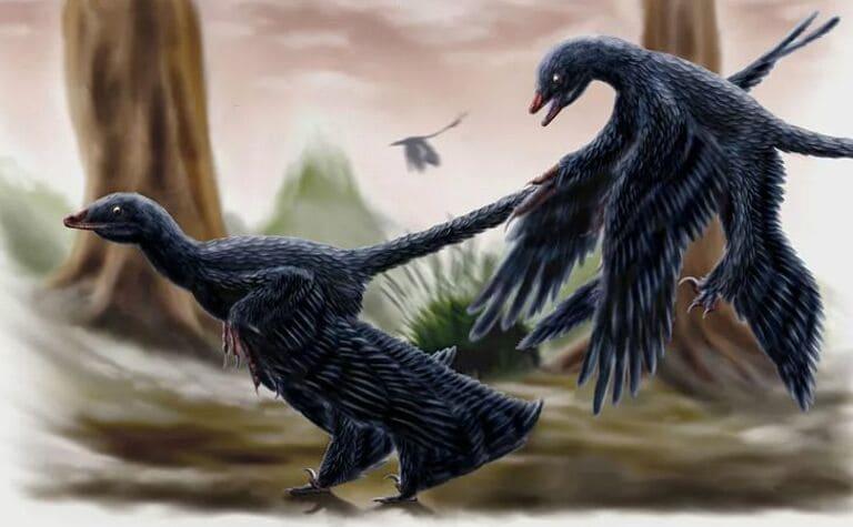 Самый маленький из когда-либо обнаруженных динозавров имеет длину всего 40 см
