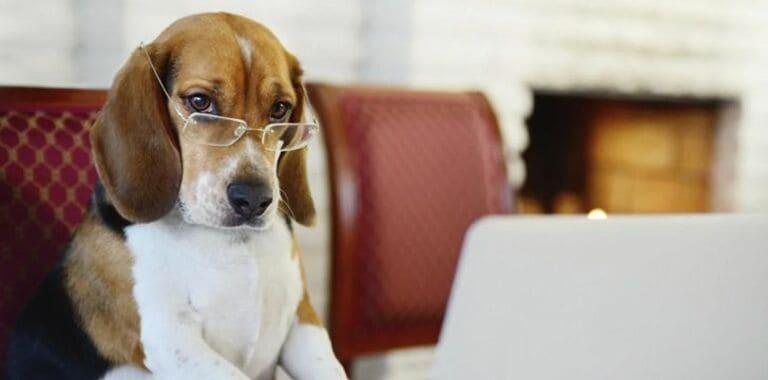 Собаки могут выучить до 250 слов и жестов