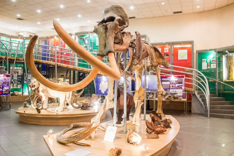 Музей, посвященный мамонтам