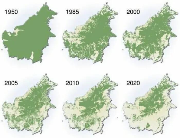 Уничтожение лесов на Борнео