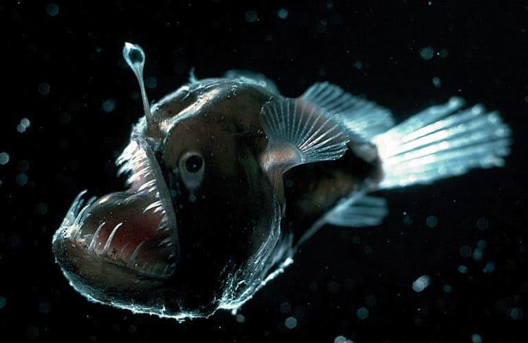 Глубоководный рысак