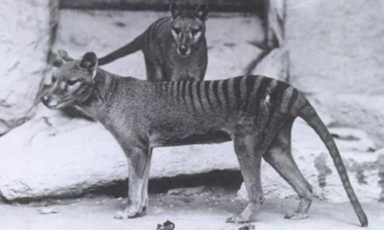 12 видов животных, которых истребил человек