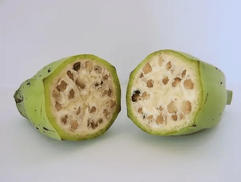 Дикие бананы