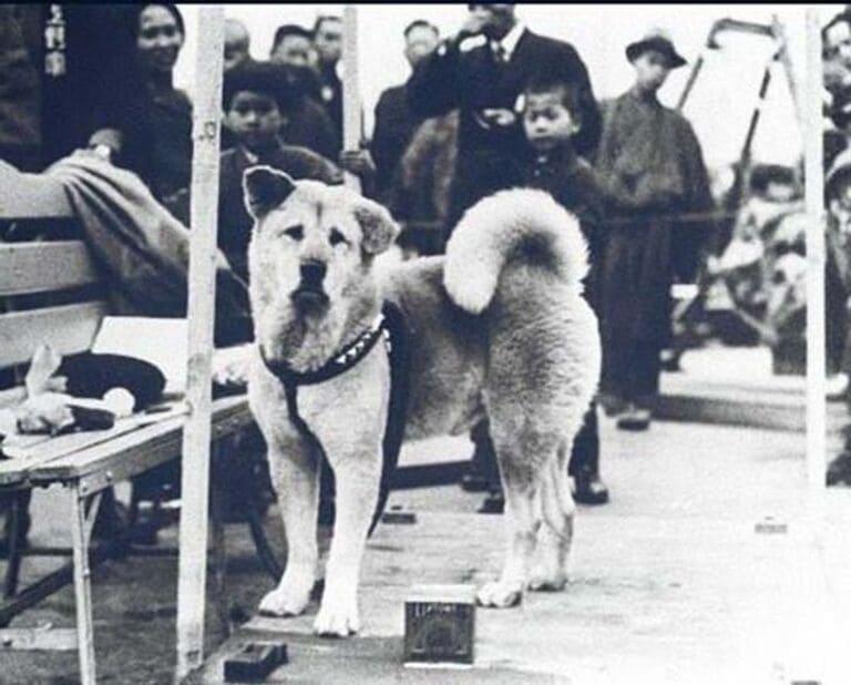 фотография знаменитого Хатико