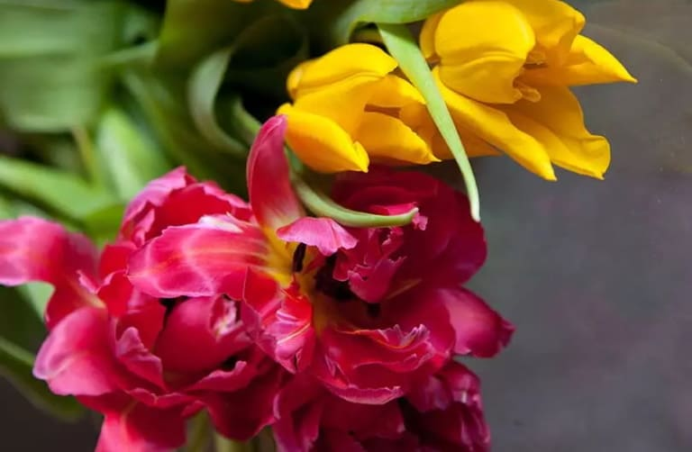Тюльпаны: 11 красивейших сортов