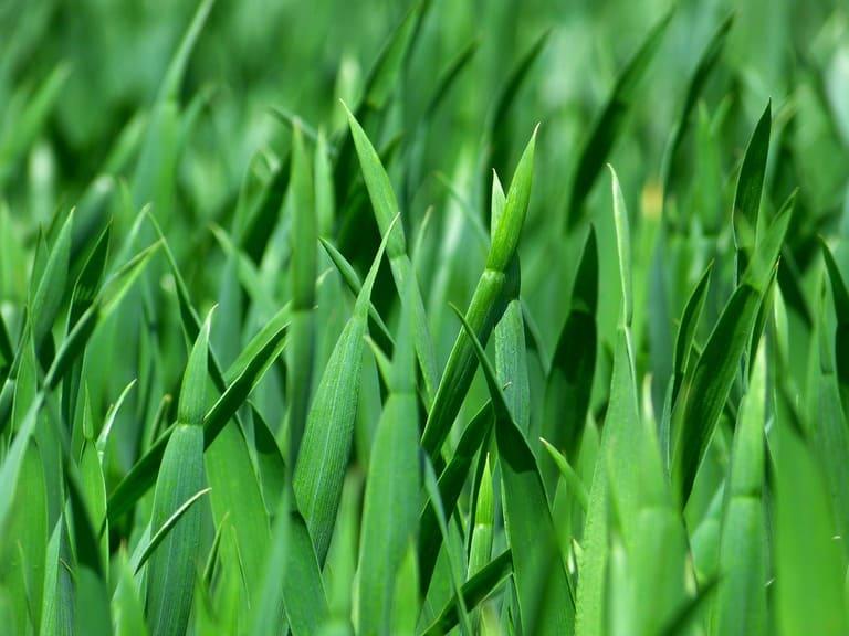10. Почему трава зеленая?