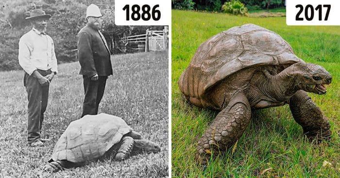 188-летняя черепаха