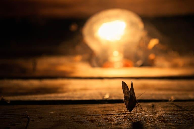 2. Почему мотыльки летят на свет?