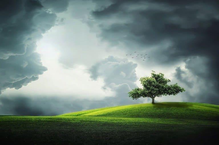 6. Как появилось первое дерево?
