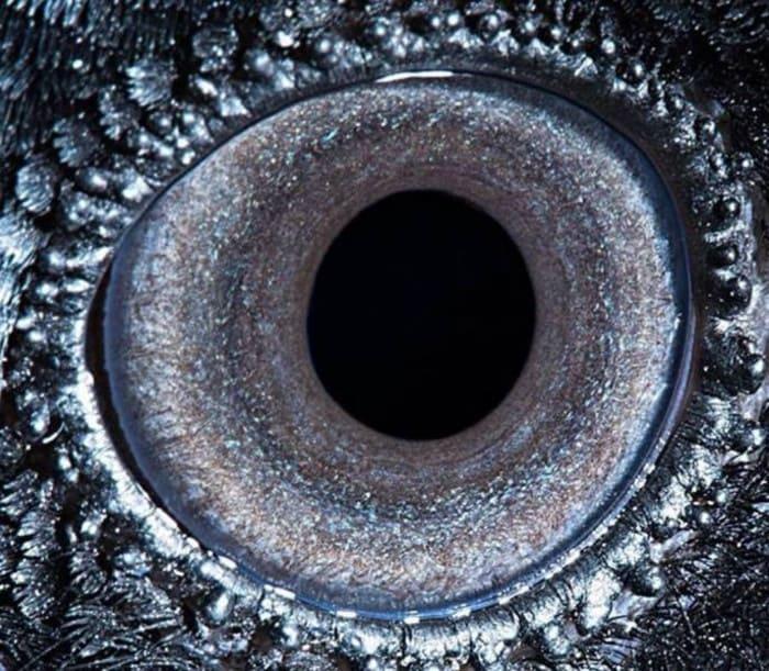 Глаз ворона
