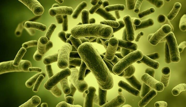 Метеоризм получает запах от бактерий