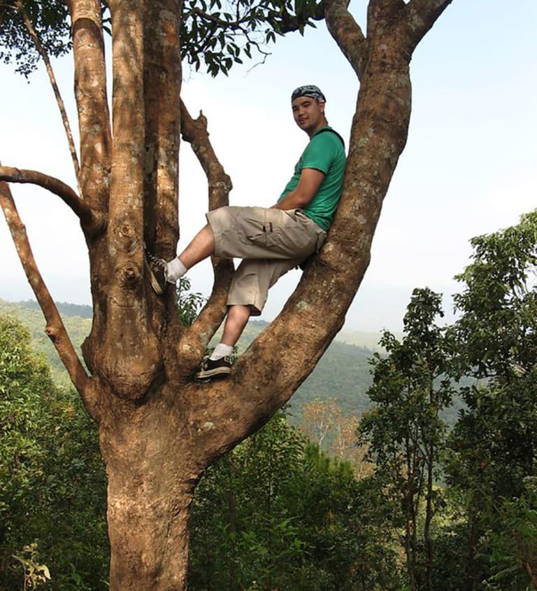 запрещено лазать по деревьям