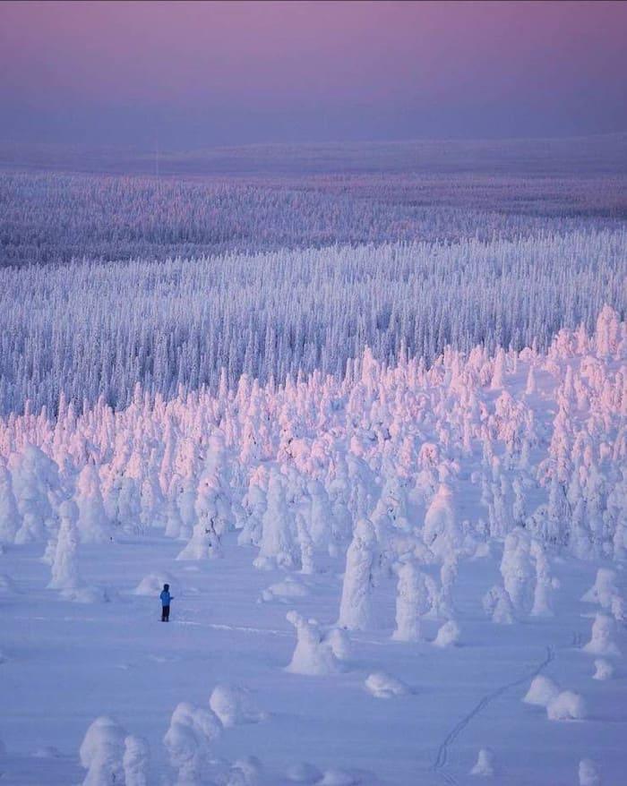 заснеженный лес в Финляндии