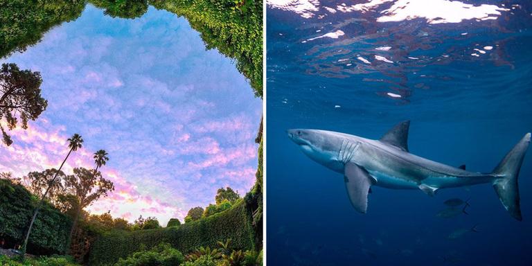 акулы или деревья