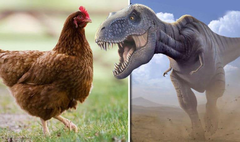 куры произошли от динозавров