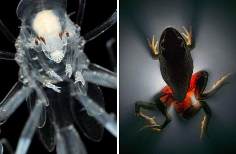 10 странных паразитов и их ужасающие способы завладеть своими хозяевами