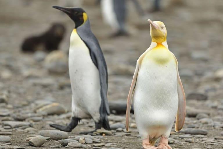 18 удивительных фактов о животном мире