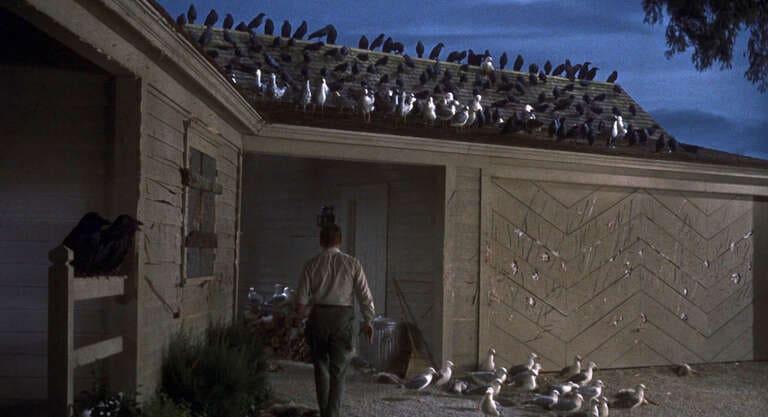 30. Птицы The Birds