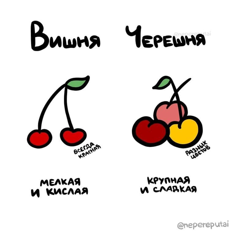 Чем отличается вишня и черешня