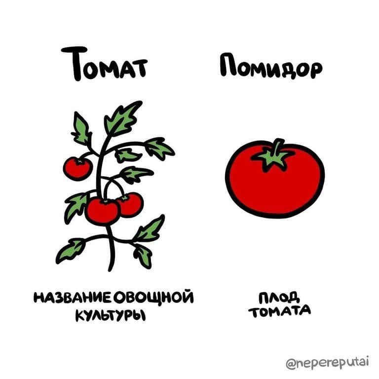 Чем томат отличается от помидора