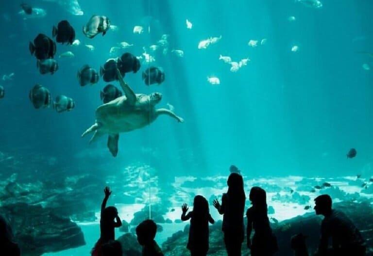 Georgia: Georgia Aquarium