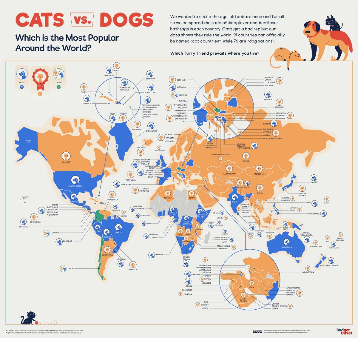 Коты против собак во всём мире