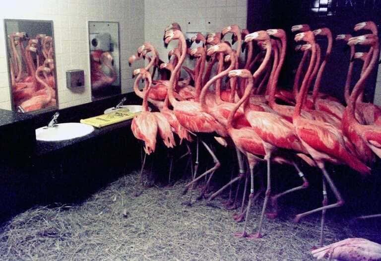 30 фламинго