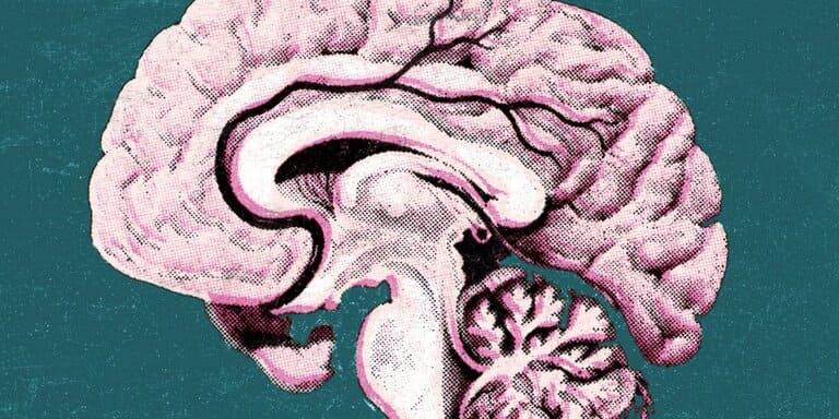 Стресс изменяет структуру мозга