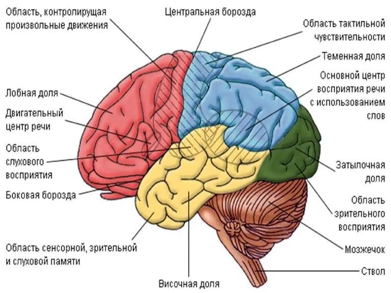 Миф 6: Отдельные области мозга воспринимают информацию только от конкретных органов чувств