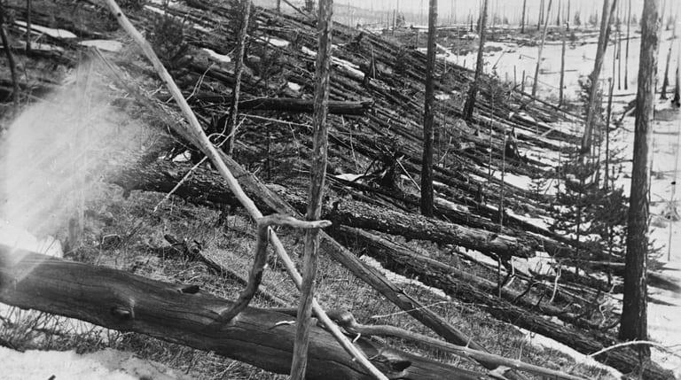 Вид обгоревшего леса в районе взрыва Тунгусского метеорита (1)