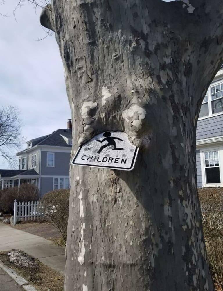 дерево, пожирающее детей