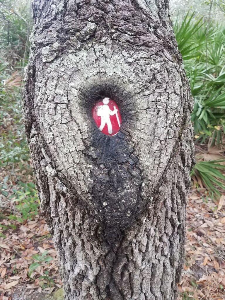 знак дерево почти поглотило