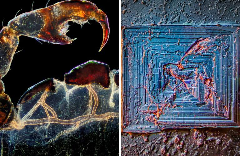 Эти изображения раскрывают природу в микроскопических деталях