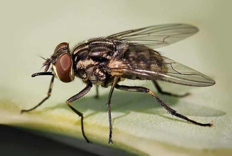 Почему осенью мухи кусаются