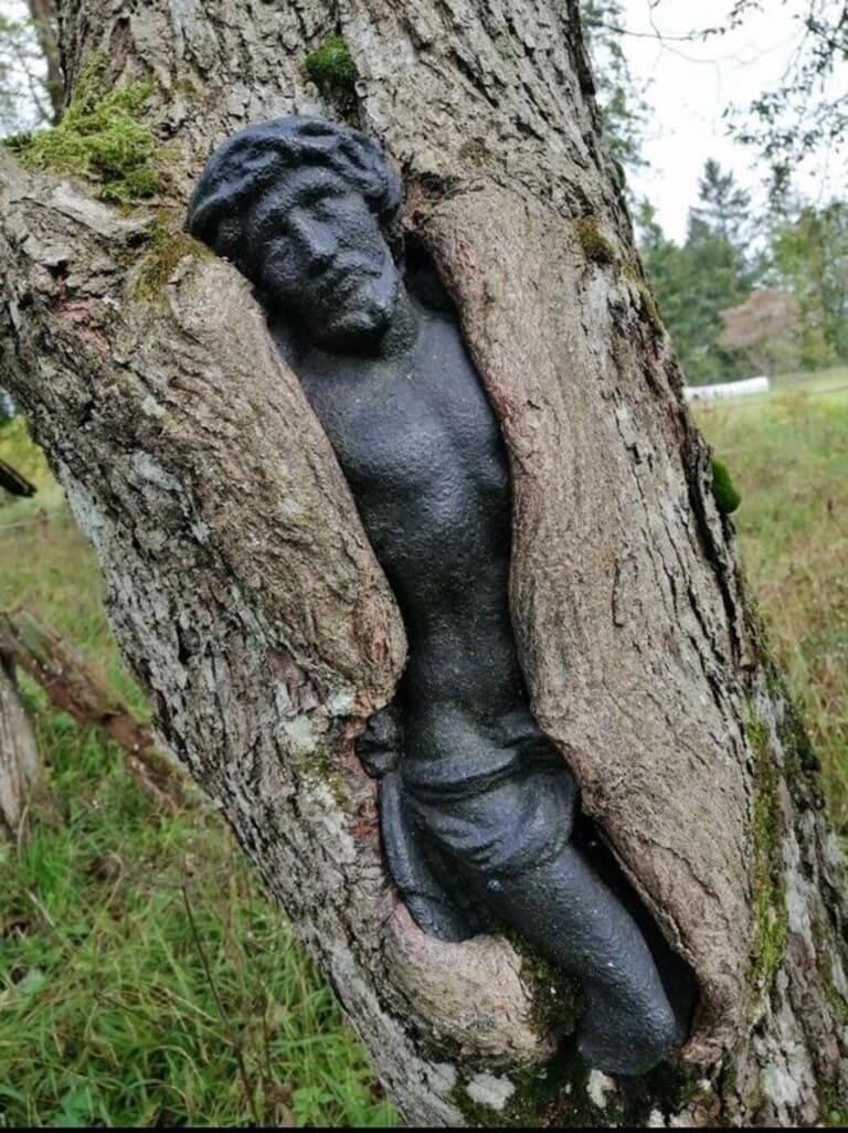 Дерево захватило статую