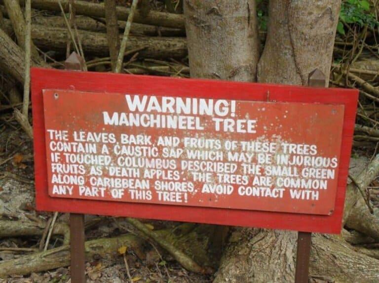 Предупреждающее объявление рядом с манцинеллой