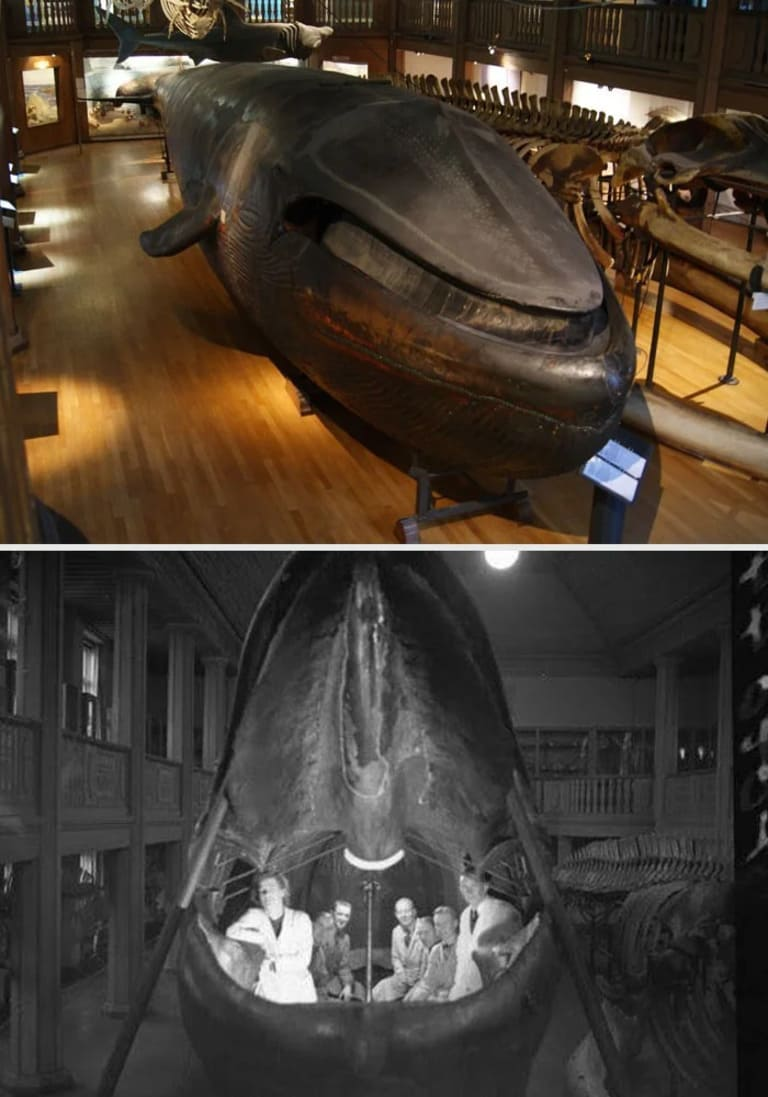 целое чучело кита