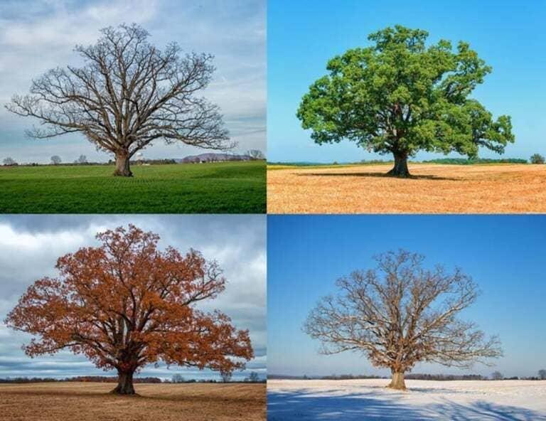 в течение каждого из четырех сезонов